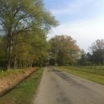 April - Andrew Jackson Marathon 084