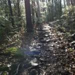 Savage Gulf Trail Marathon (2012) Roots