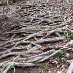 Savage Gulf Trail Marathon (2012) Rusted Root Trail - Send Me On My Way