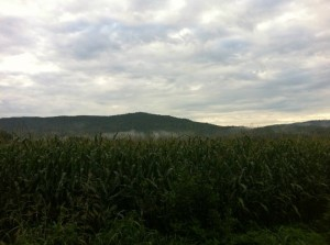 VS500K RR - Vol State 500K Scenery - Corn